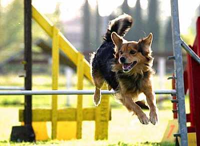 Foto articolo tipologie addestramento cinofilo