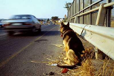 foto principale abbandono animali