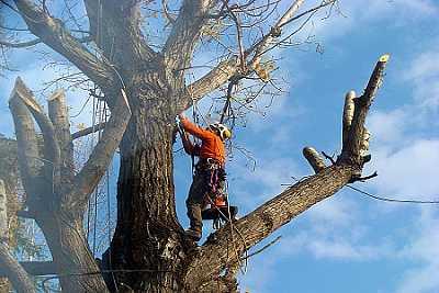 foto principale per articolo potatura albero