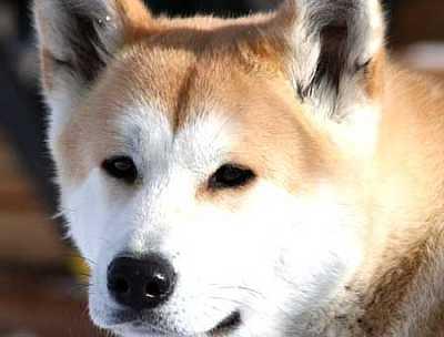 Foto articolo risarcimento morso cane