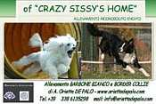 Allevamento OF CRAZY SISSY HOME
