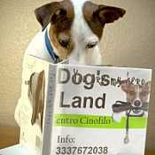 Centro cinofilo Dogs Land