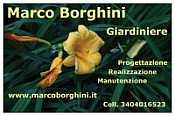 Marco Borghini