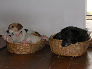 DogSoul Foto 10