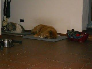 DogSoul Foto 11