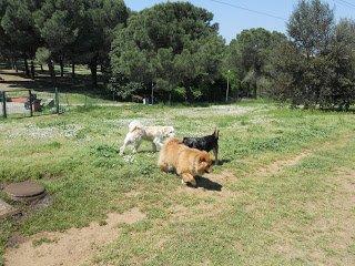 DogSoul Foto 12