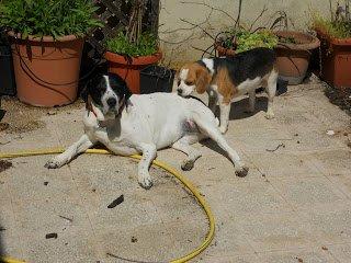 DogSoul Foto 14