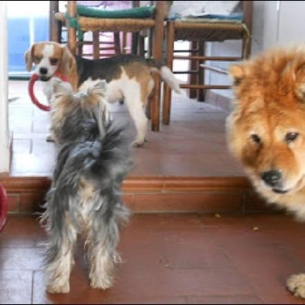 DogSoul Foto 15