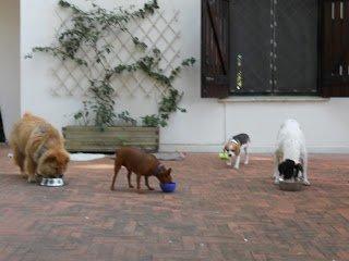 DogSoul Foto 4