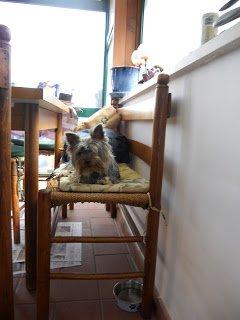 DogSoul Foto 8