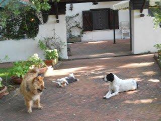 DogSoul Foto 9