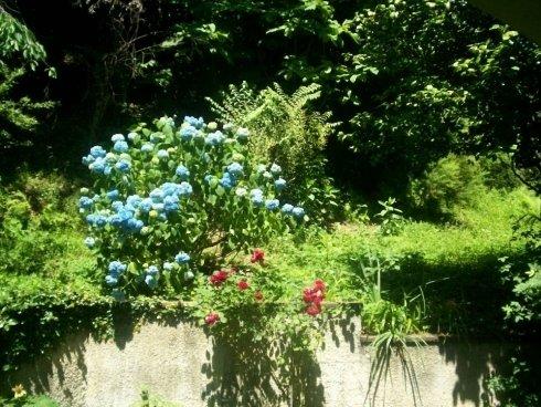 Green heaven srl Foto 1