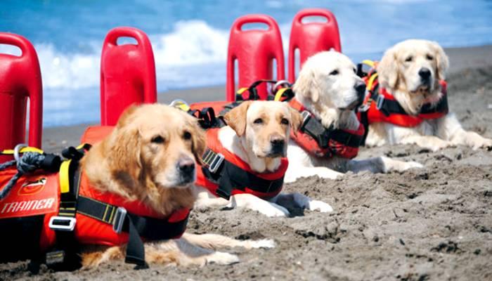 Cani addestrati per il soccorso marino