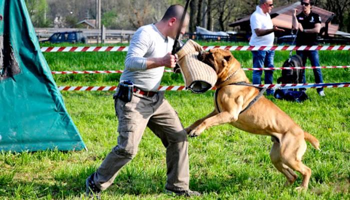 Dimostrazione dell'addestramento utilità e difesa per il cane